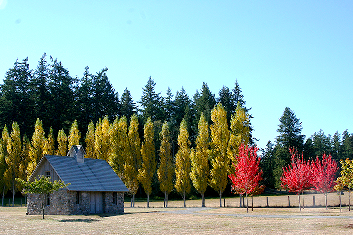 Windmere-Orcas-Island-colortrees