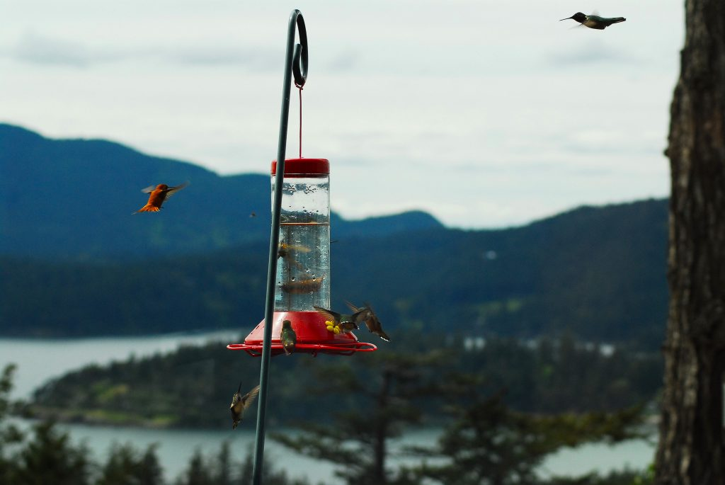 Windmere-Orcas-Island-hummingbirds1